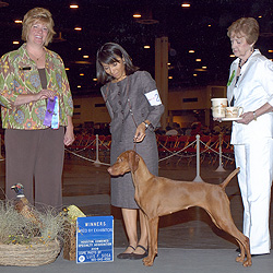 Trip goes WB for a major at the Texas Gulf Coast Vizsla Club Specialty, Judge Kathy Rust--Handled by Owner/Co-breeder, Mel Reveles